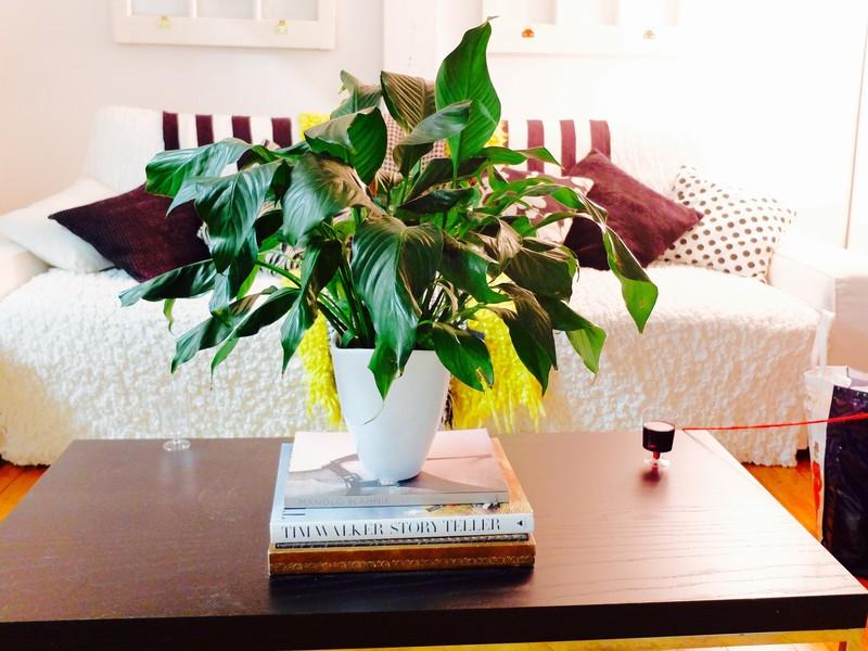 Plant on books
