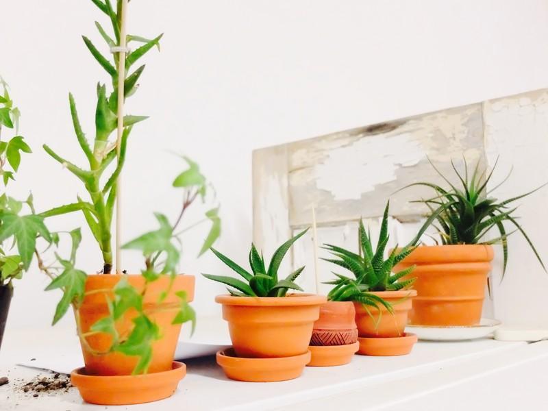 Terra Cotta Plants